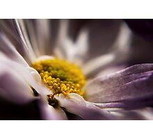 Radiant Daisy Photographic Print