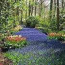 The Flower Lane, 2012, Keukenhof Gardens, Holland by BlueMoonRose