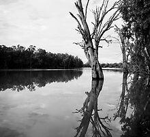 Murray River, Euston by Linda Lees
