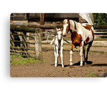 Painted Mother & Foal 2 Canvas Print