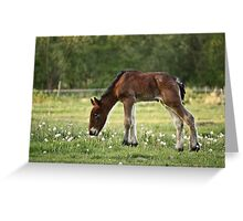 Belgian Draft Baby 2 Greeting Card