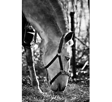 Andalusian Mare Photographic Print