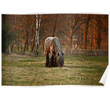Belgian Draft Horse - Sunset Poster