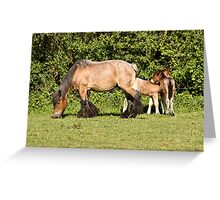 Belgian Draft Horse - New Arrivals Greeting Card