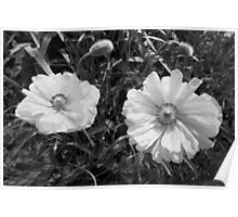 Twin Poppies Poster