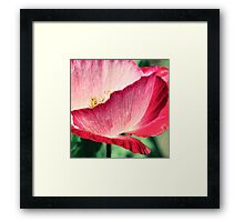 Red Poppy in Sunlight Framed Print