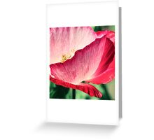 Red Poppy in Sunlight Greeting Card
