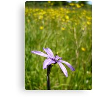 Blue Eyed Grass and Buttercups Canvas Print