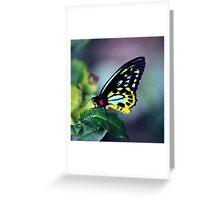 Fluorescent Birdwing Greeting Card