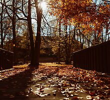 Autumn by Tomáš Hudolin