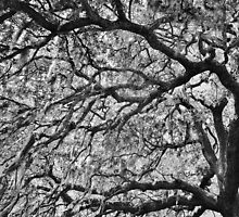 Branches by Paulette1021