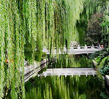 Weeping Willow by the WORLD in a  FRAME