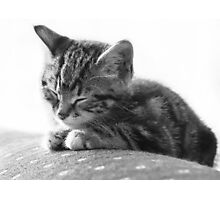 Sleeping Kitten (non-clothing products) Photographic Print