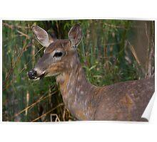 Deer in earth tones Poster