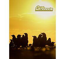 Sunset around penguins Photographic Print