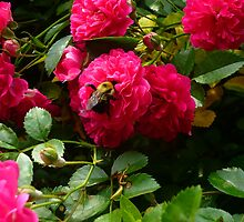 Red Roses with Bumblebee by Vivian Eagleson