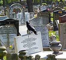 History of Headstones and a Crow by Sandra Caven