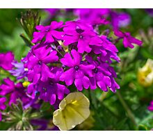 Summer Color Photographic Print