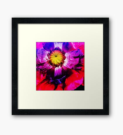 Poppy Bright (F.11) Framed Print