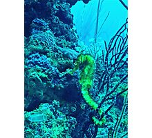 THE MELLOW YELLOW SEAHORSE Photographic Print