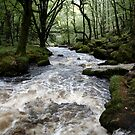 Golitha Falls - Cornwall by Samantha Higgs