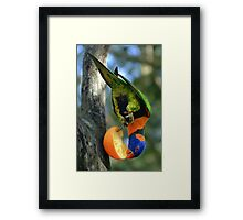Rainbow Lorikeet II [Print & iPad Case] Framed Print
