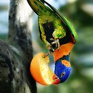 Rainbow Lorikeet II [Print & iPad Case] by Damienne Bingham