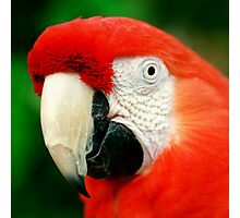 Scarlet Macaw Photographic Print