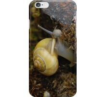 Snail Friend iPhone Case/Skin