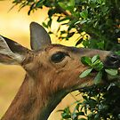 OH DEER... by RoseMarie747