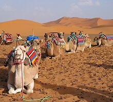 Camel Train by GypsySoulImages