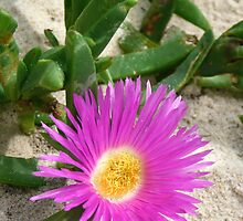 Pretty Pigface  by GypsySoulImages
