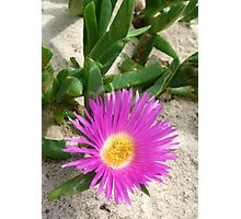 Pretty Pigface  Photographic Print