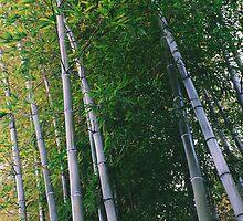 Bamboo by lorenzoviolone