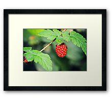 Berry Framed Print