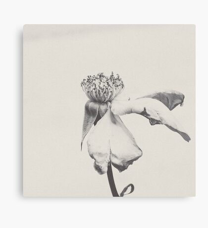Paper Rose Canvas Print