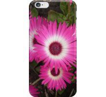 Mesembryanthemum Pink iPhone Case/Skin