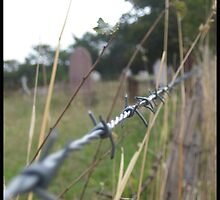 Barbed Wire by Chemical Creations  Photography