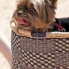 Basket Of Love by phil decocco