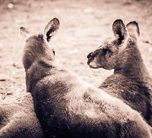 Lazing About - Halls Gap by Andrew Dodds