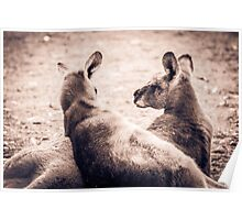 Lazing About - Halls Gap Poster