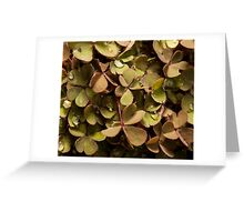 small clover with raindrops on top Greeting Card