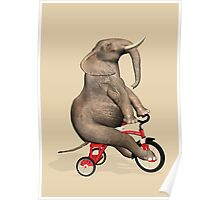 Elephant On Red Tricycle Poster