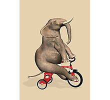 Elephant On Red Tricycle Photographic Print