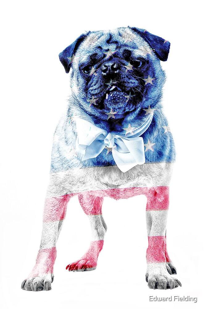 American Pug by Edward Fielding