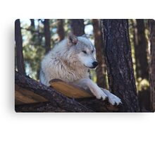 Timber Wolf Sentinel Canvas Print