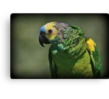 Bird Bird Bird Canvas Print