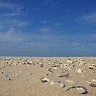 Shoreline by heinrich