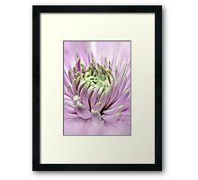 Abstract Dahlia Framed Print