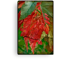 Angel On The Wing Canvas Print